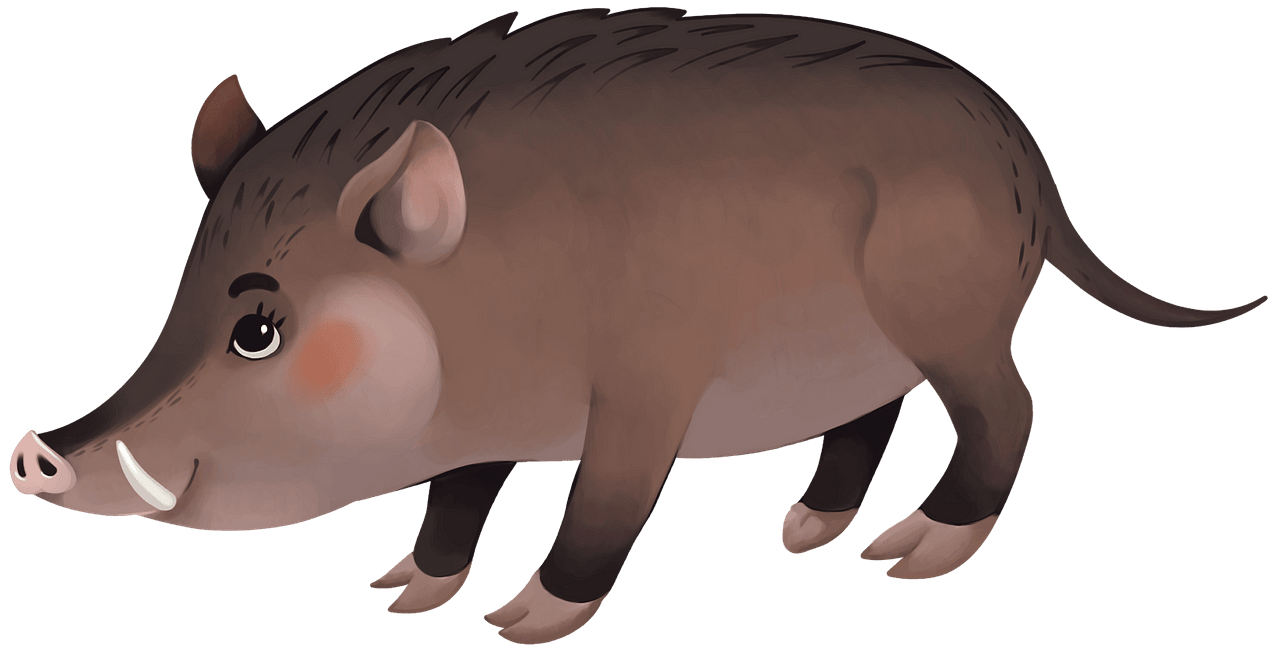 Wild boar clipart. Free download..