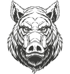Boar Head Vector Images (over 960).