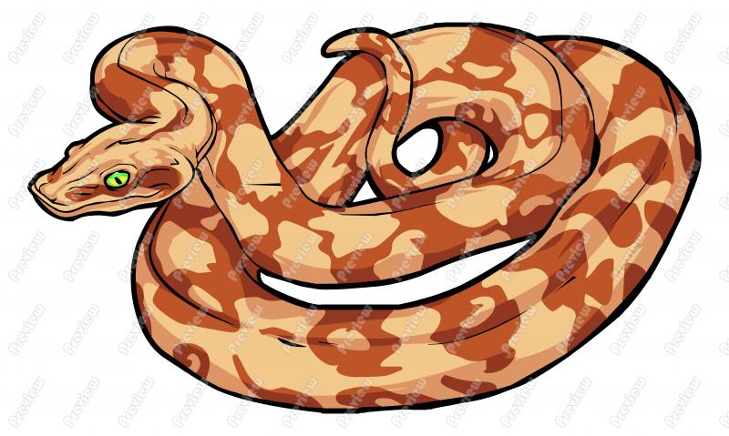 Boa Constrictor Drawing at GetDrawings.com.
