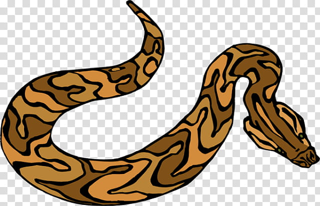 Family Tree, Snakes, Green Anaconda, Australian Brown Snakes.