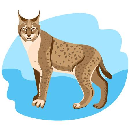 1,023 Bobcat Stock Illustrations, Cliparts And Royalty Free Bobcat.