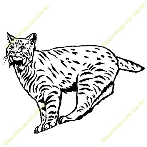 bobcat clip art #14.
