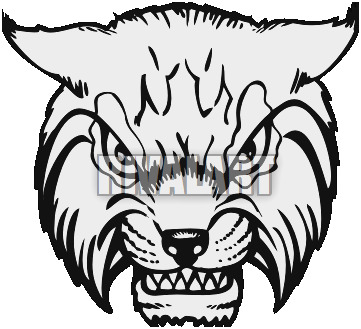 Bobcat Face Drawing at PaintingValley.com.