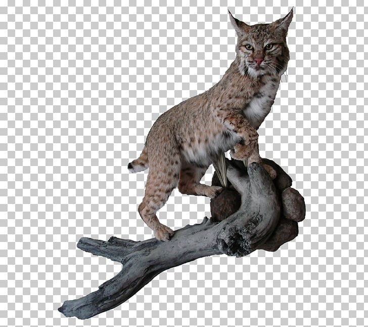 Bobcat Deer Elk Cougar Moose PNG, Clipart, Animal, Animals, Az.