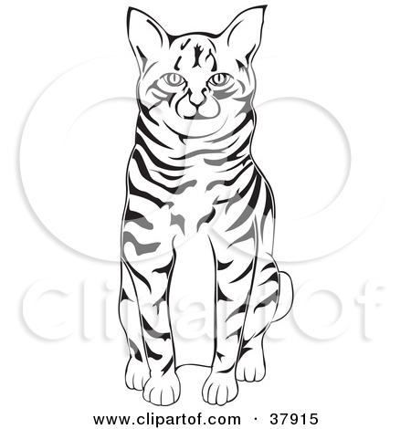 Clipart Illustration of a Black And White American Bobtail Cat.