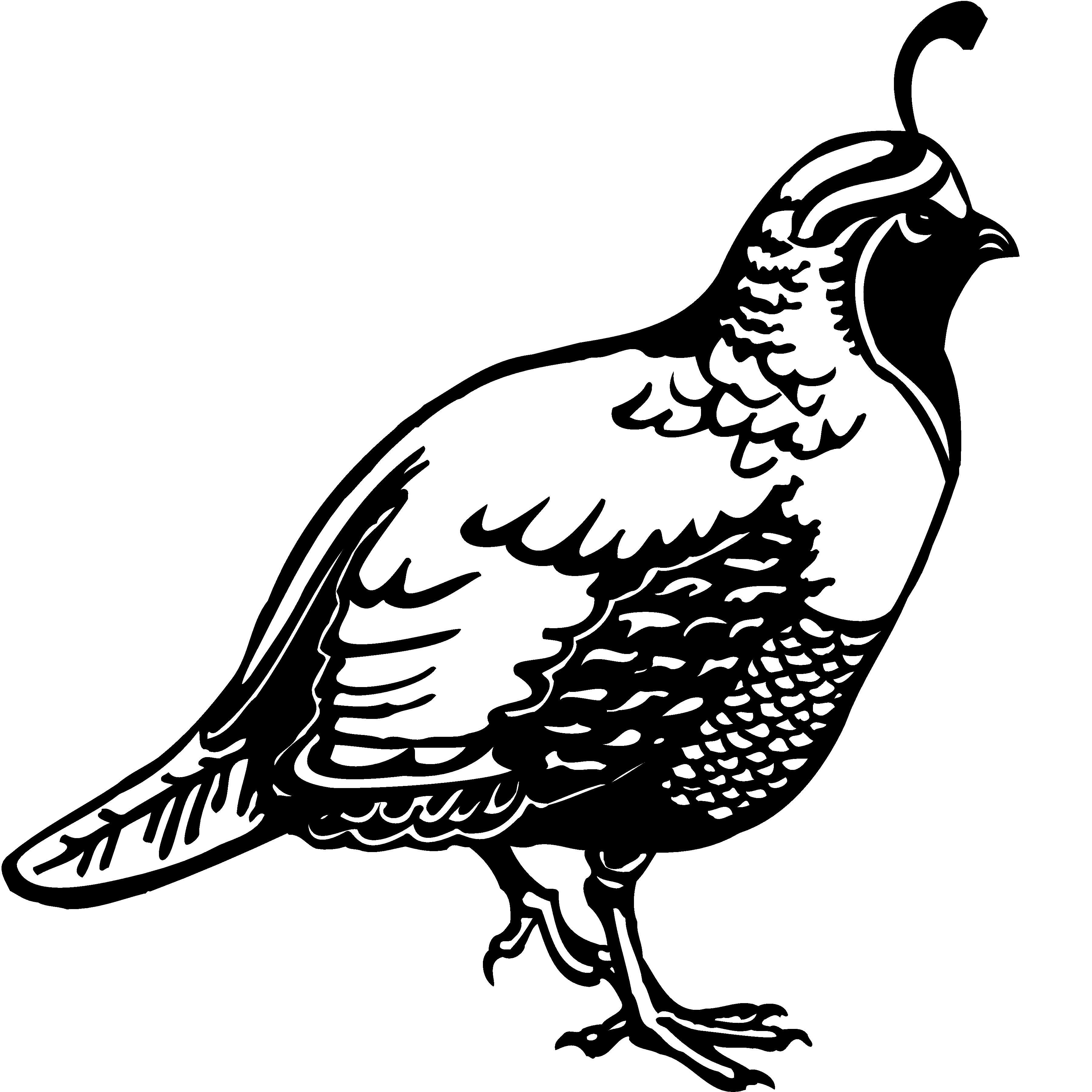 animal, quail, Clip Art.