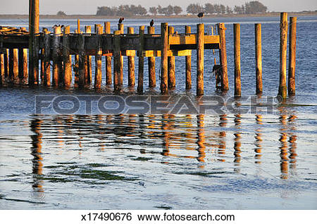 Stock Images of Bodega Bay old pier in tidal waters x17490676.