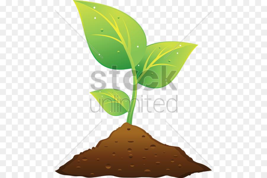 Pflanze und Boden.