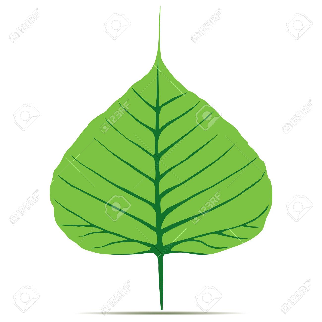 Bodhi (Sacred Fig) Leaf Illustration. Royalty Free Cliparts.
