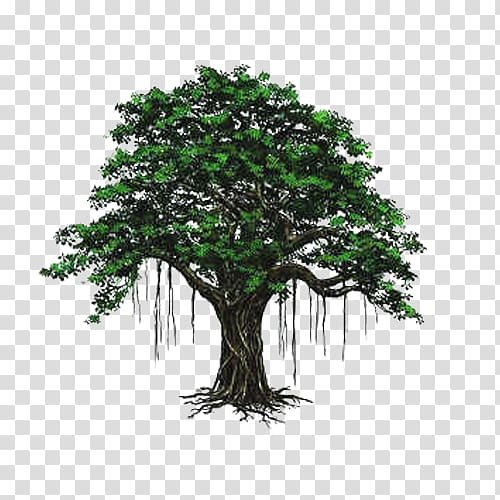 Bodhi tree hand painted material transparent background PNG.
