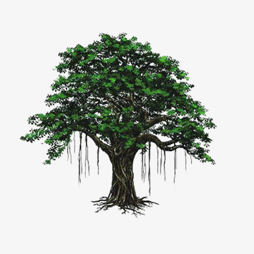 Bodhi Tree Hand Painted Picture Material, Tree Clipart, Bodhi Tree.