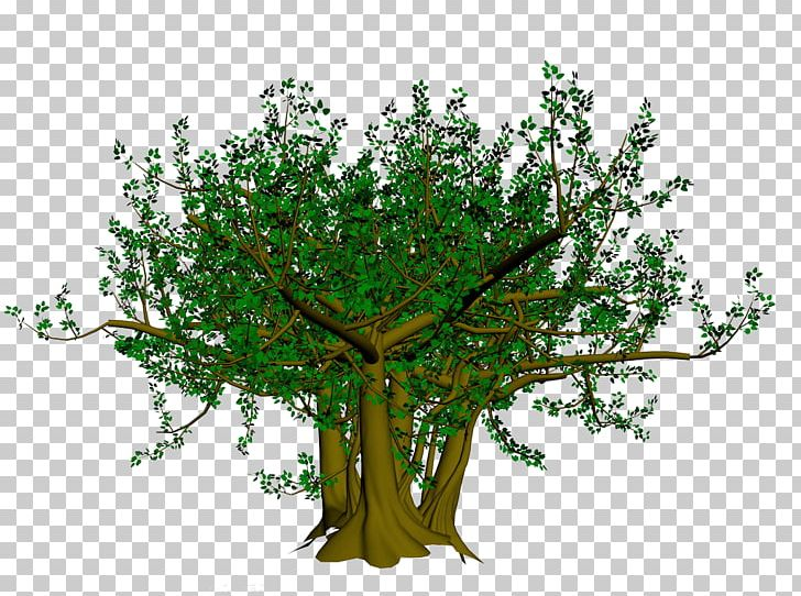 Bodhi Tree Branch Ficus Religiosa PNG, Clipart, Balloon Cartoon.