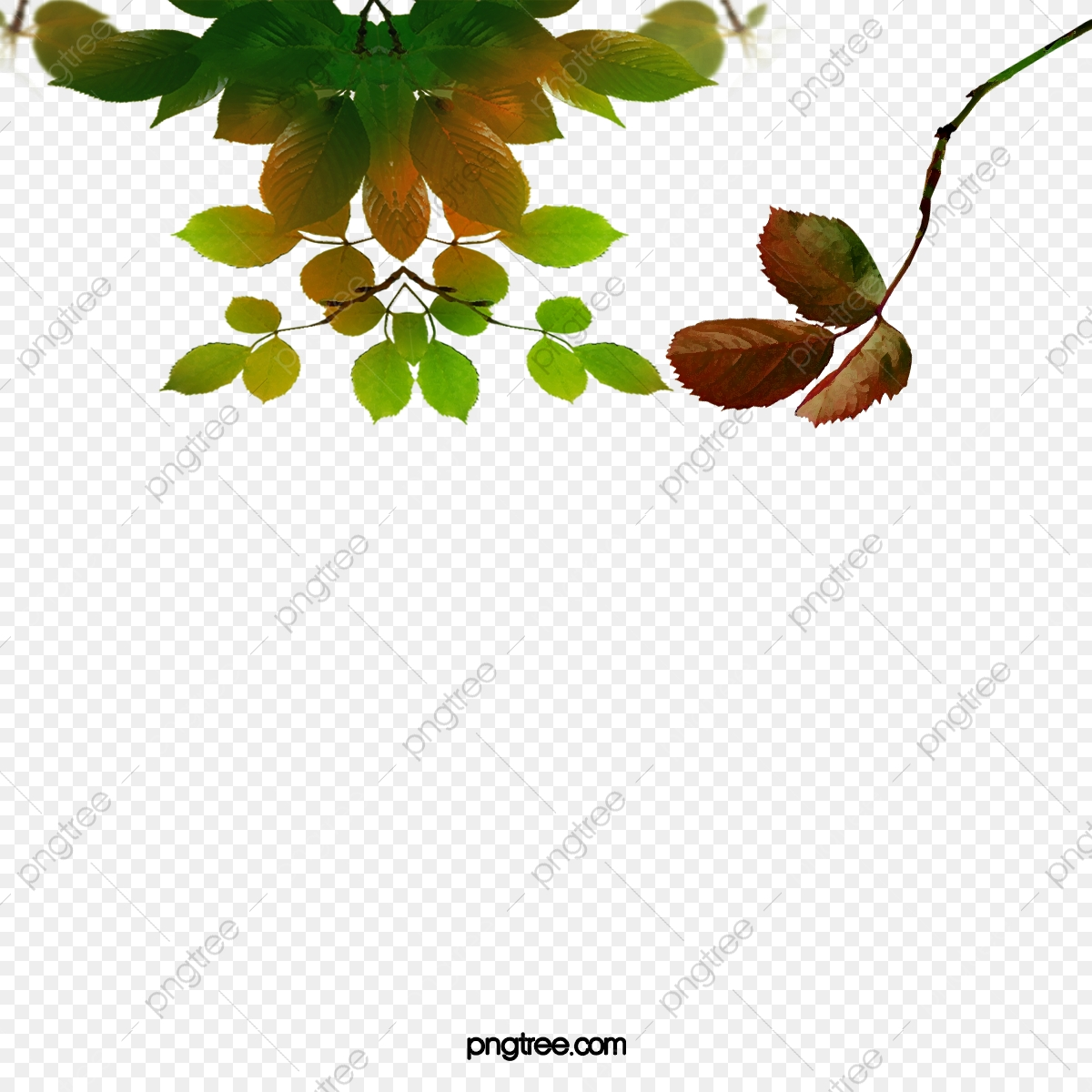 Bodhi Tree Leaves Picture Material, Tree Clipart, Bodhi Tree, Leaves.
