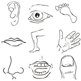 Part of the clipart #8