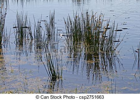 Stock Photos of Bodmin Moor, Colliford Lake, Cornwall, England.