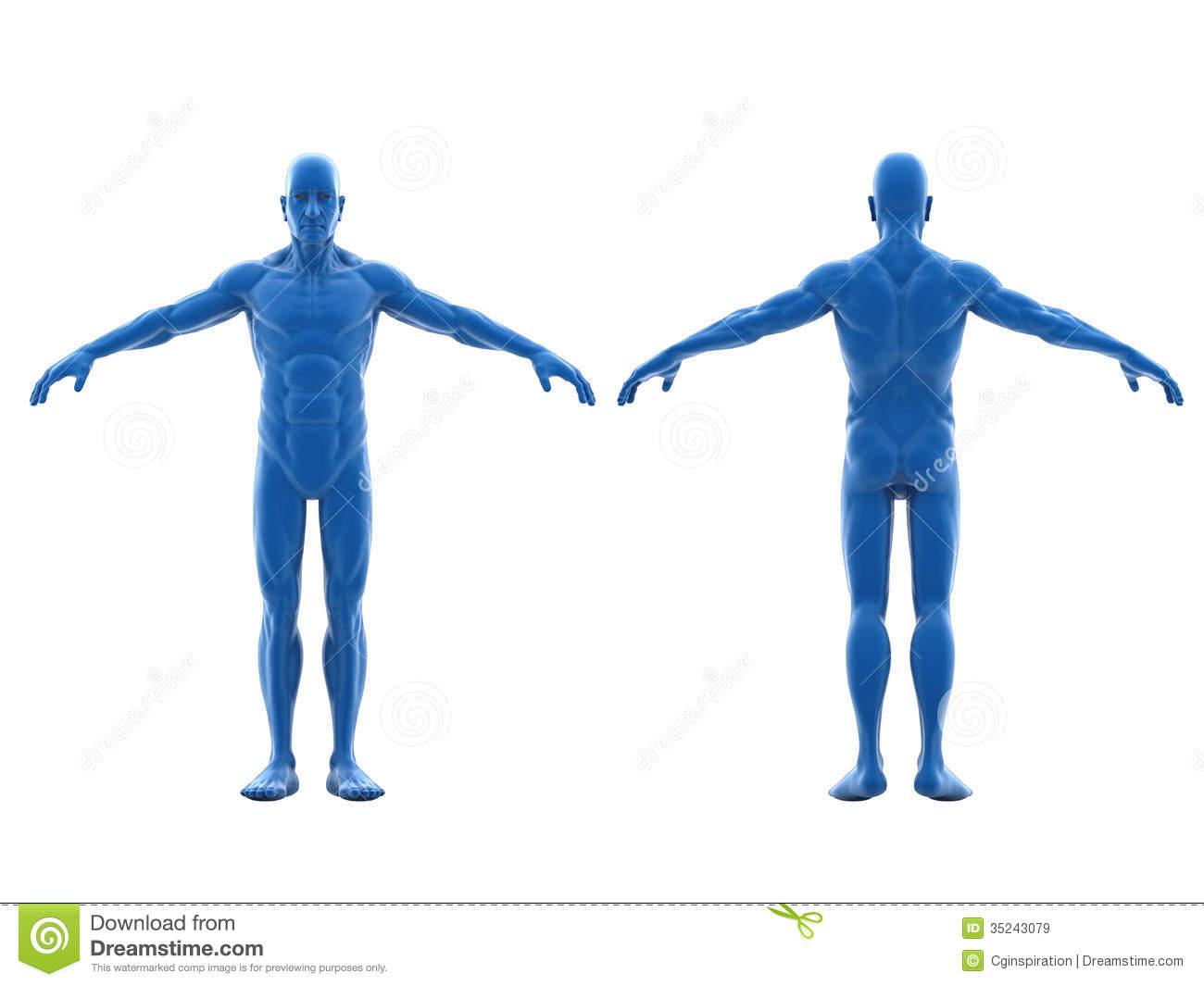 Human Body Clipart Free.