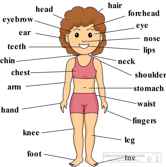 Clipart Body Parts.