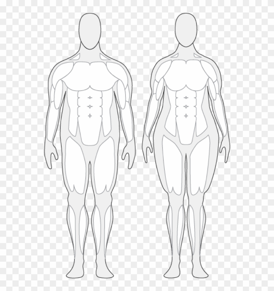 Body Composition Cliparts.