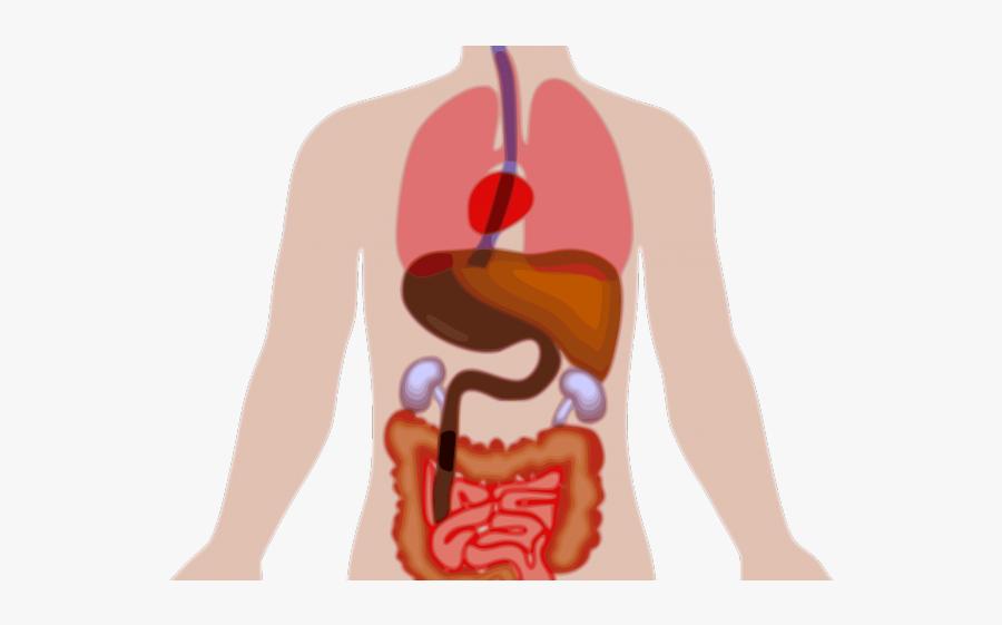 Human Body Clipart.