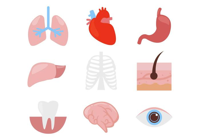 Human Organ Body Parts Icons Vector.
