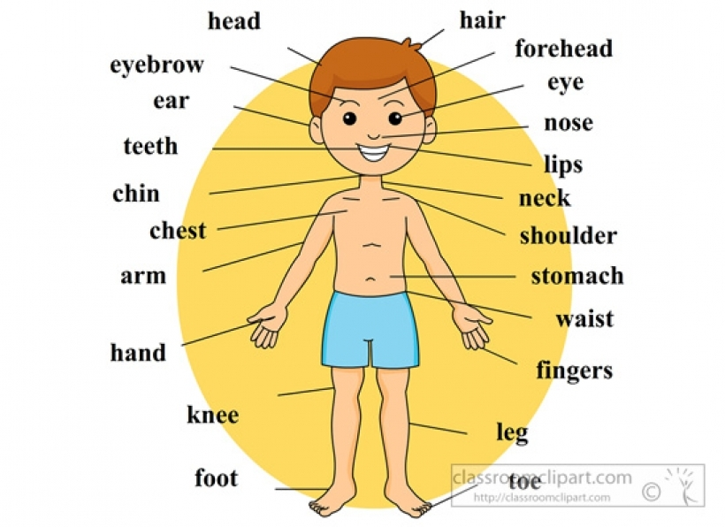 Body parts clipart #15