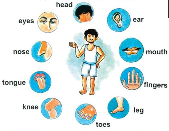 Body parts clipart for kids.