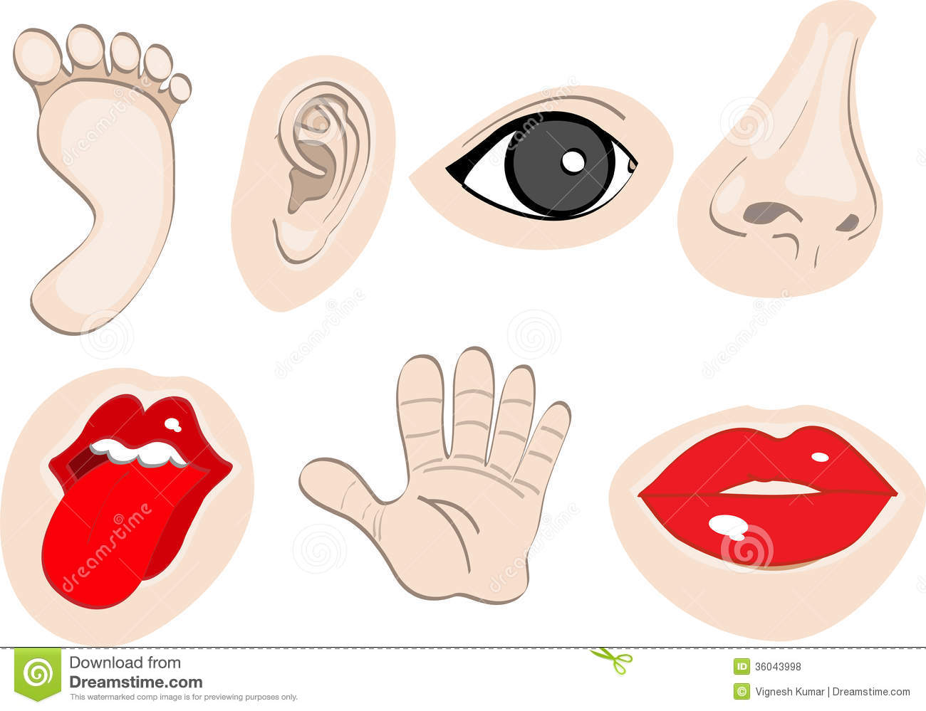Human body parts clipart.