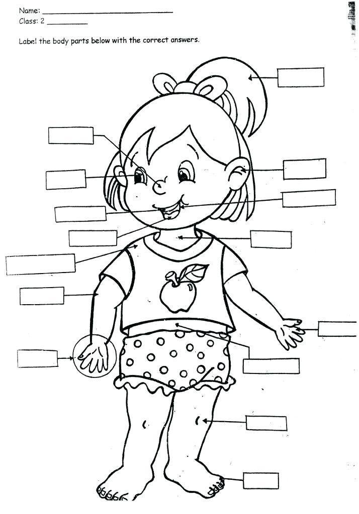 Body parts clipart black and white 5 » Clipart Station.