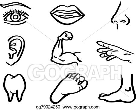 Body parts clipart black and white 4 » Clipart Station.