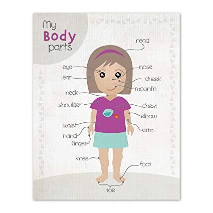 Amazon.com: Room Decor For Teen Girls, Body Parts Clipart.