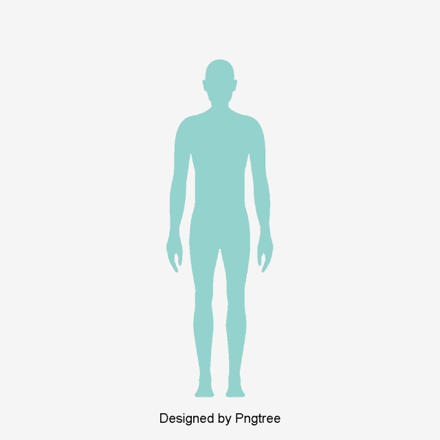 Human Body Png, Vector, PSD, and Clipart With Transparent Background.