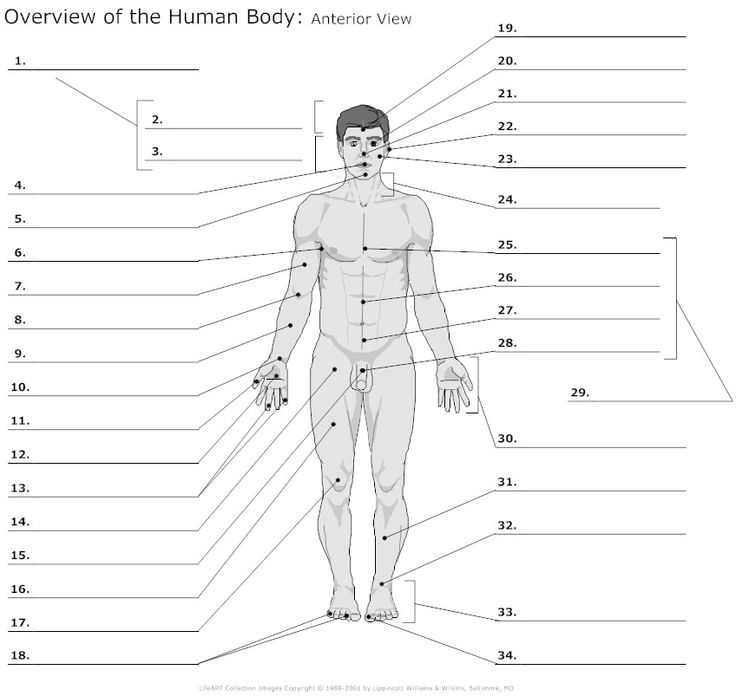 Body Regions Clipart For Ap 20 Free Cliparts