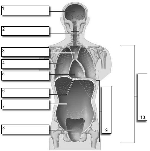 Body Cavities Clipart For Ap.