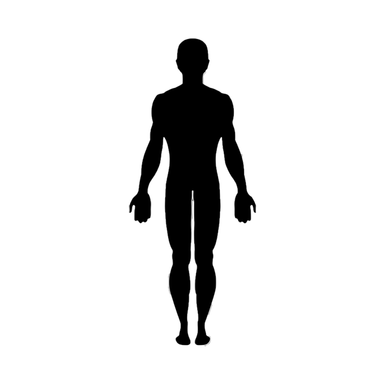 Vector graphics Clip art Human body Image.