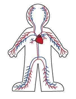 Body system clipart 1 » Clipart Station.