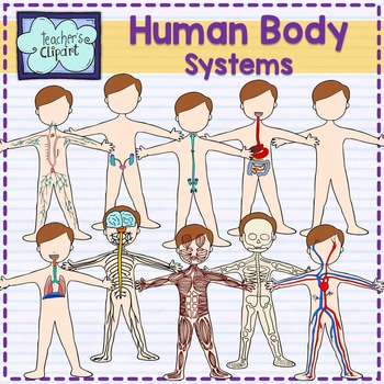 Human Body systems clipart {Science clip art}.