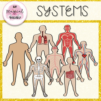 THE HUMAN BODY ~ SYSTEMS CLIP ART.