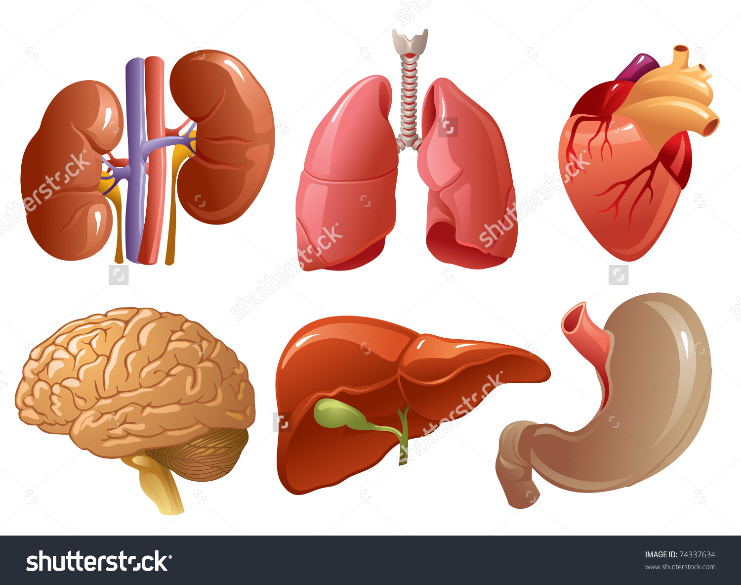 Collection of free Donating clipart organ. Download on.