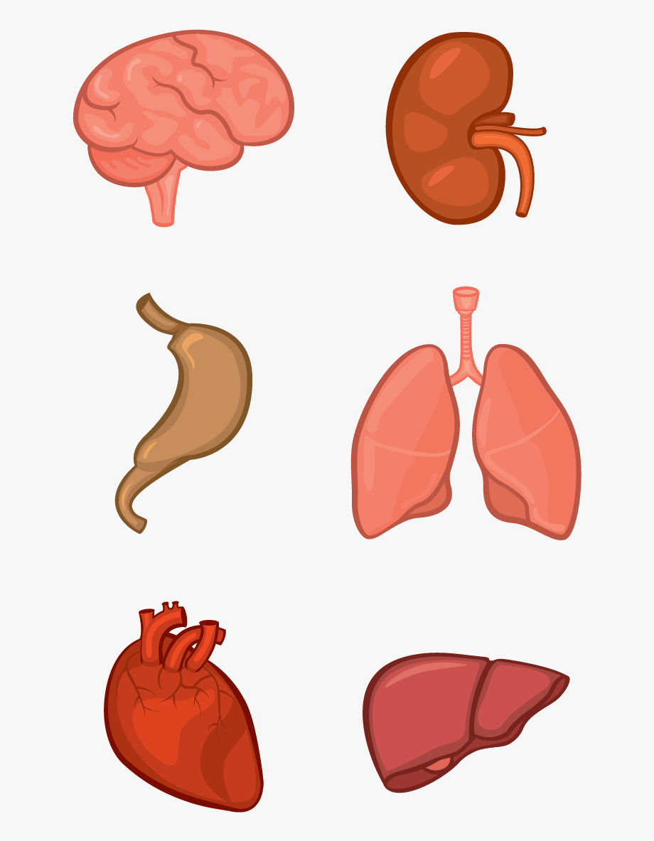 Clipart Freeuse Library Body Tissue Clipart.