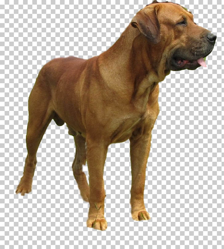 Tosa Dog breed Boerboel Broholmer Alano Español, others PNG.