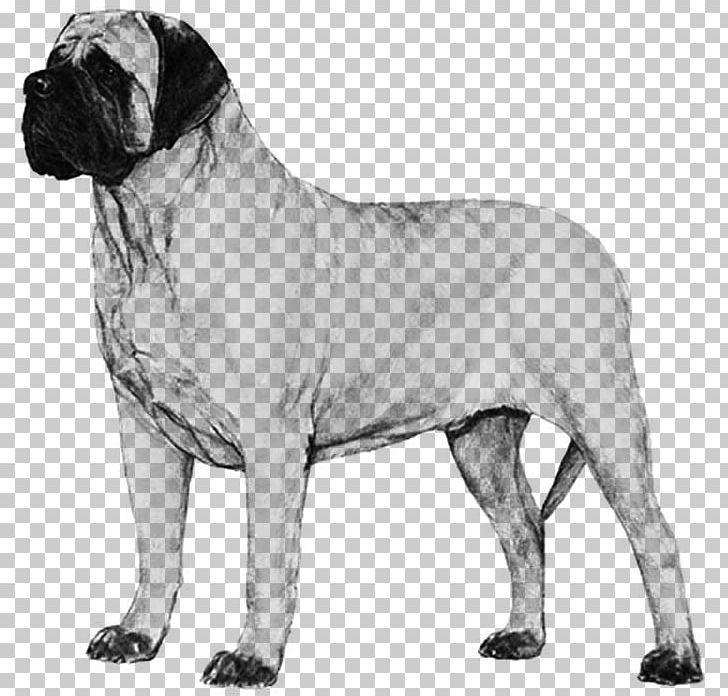Dog Breed Bullmastiff English Mastiff Boerboel Neapolitan.