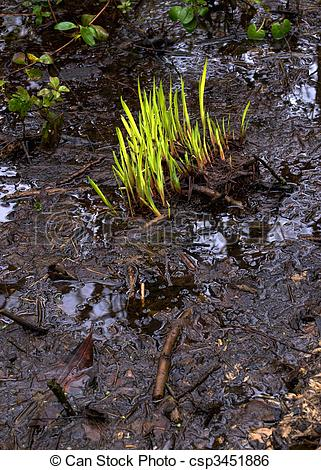 Stock Image of Bog Garden.