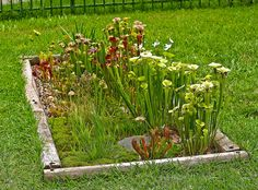 Make a Hydroponic Bog Garden (Water Recycling).