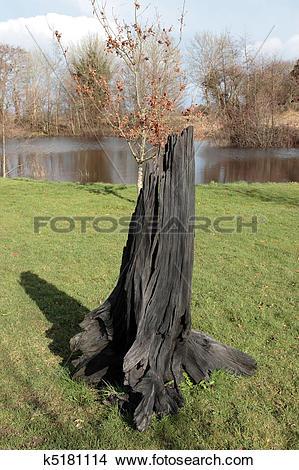 Stock Photo of solid black bog oak k5181114.