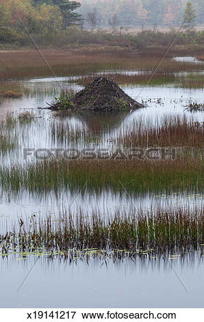 Picture of Beaver Lodge, New Mills Meadow Pond x19141217.