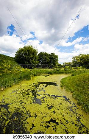 Stock Photography of bog (summer) k9856040.