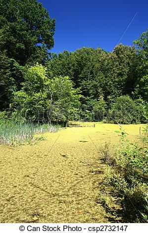 Picture of summer landscape with bog.