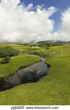 Stock Photography of Corsica. Pozzis, peat bog, near the Col de.