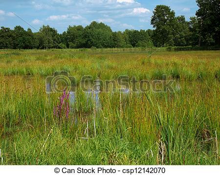 Picture of bog Plothen.