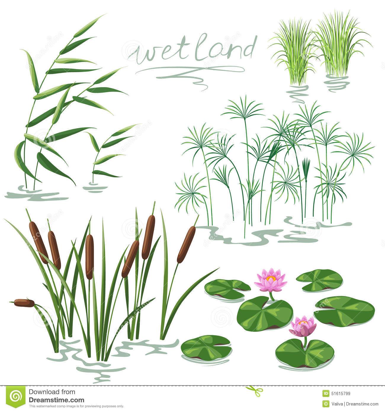 Wetland Plants Set Stock Vector.